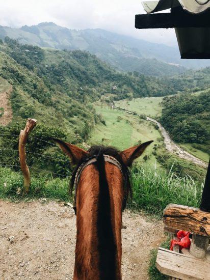 cheval-equitation-therapeutique-zootherapie-animal