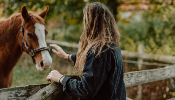 cheval-cuba-amour-animotherapie-zootherapie