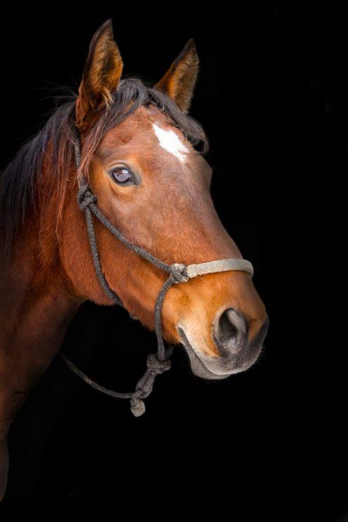 cheval-zootherapie-animotherapie-sorel-tracy