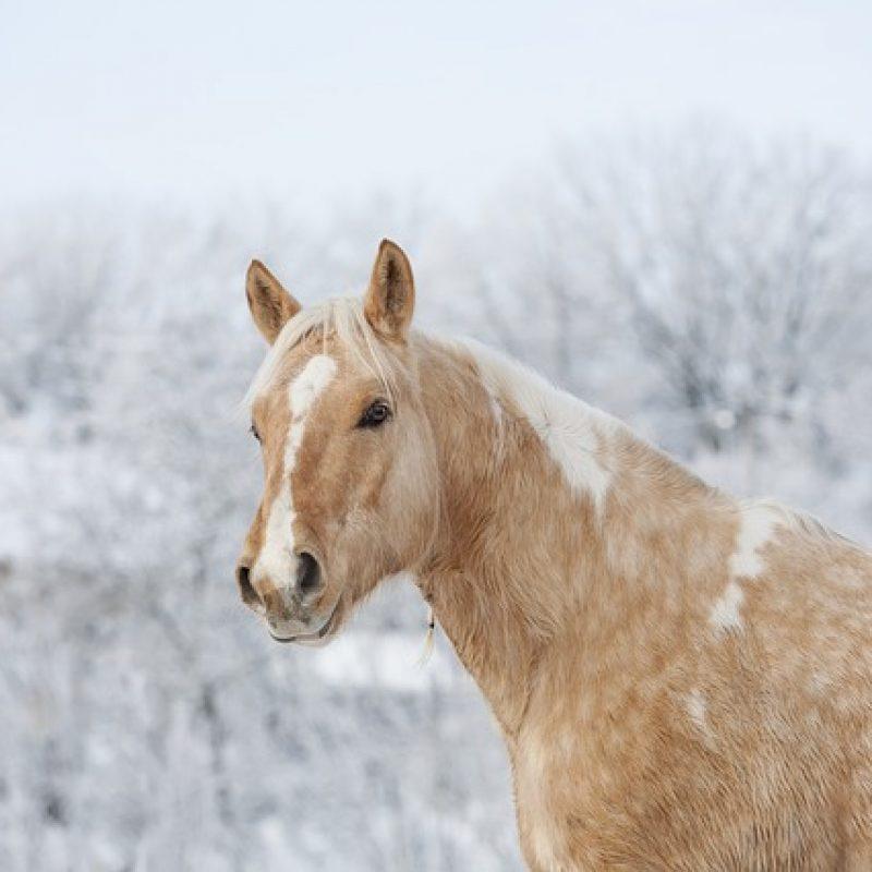 horse-3054682_640