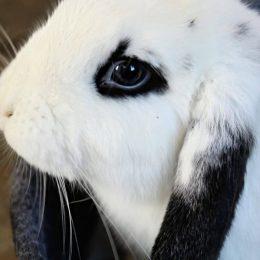 Notre gentille petite lapine